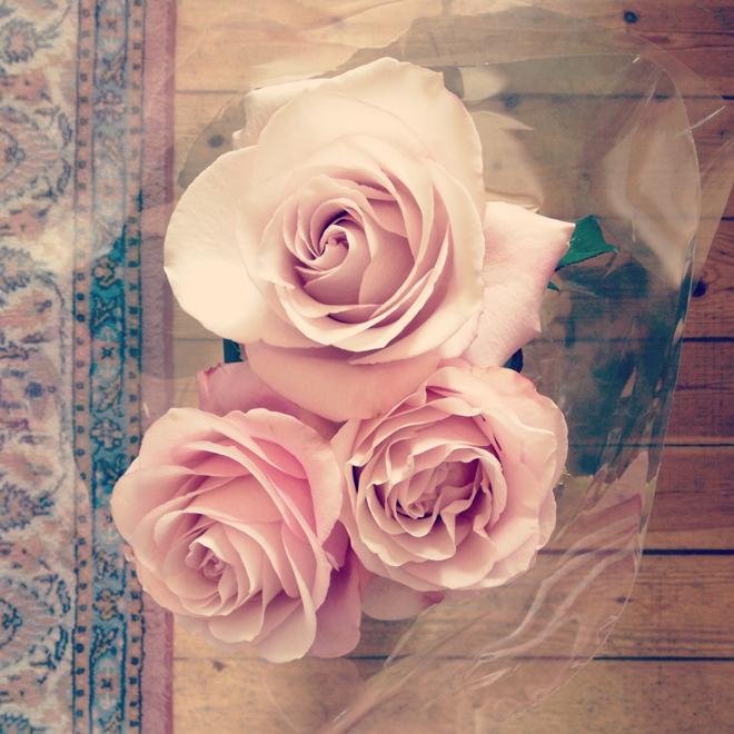 fina bilder på rosor